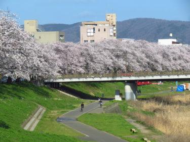 福井市都心部の桜の名所2019年版